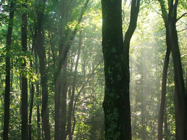 Kentucky rain forest