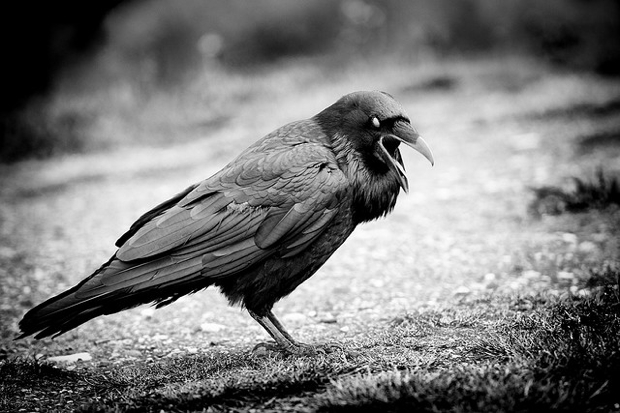 scary crow