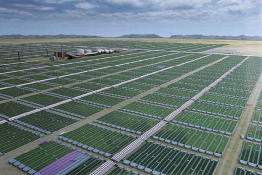 external image algae5.jpg