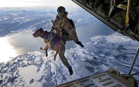 air dog
