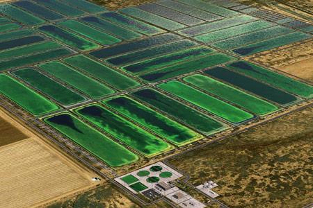 algae field
