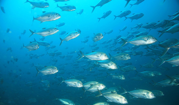 ocean index a doomsday clock for the world s oceans