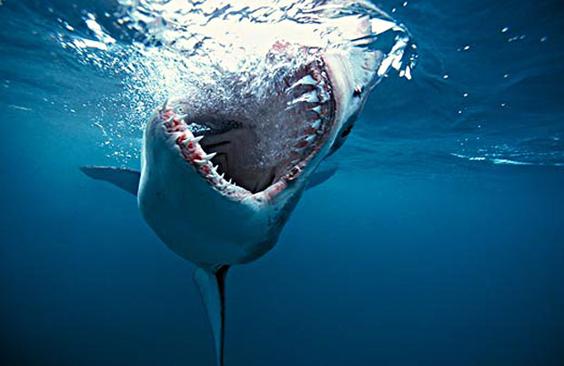 Big Data & Big Sharks: Marketing Technology in the Food Chain