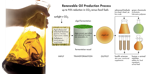 Renewable Oil