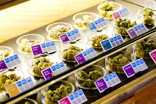SPARC counters displaying different types and grades of marijuana