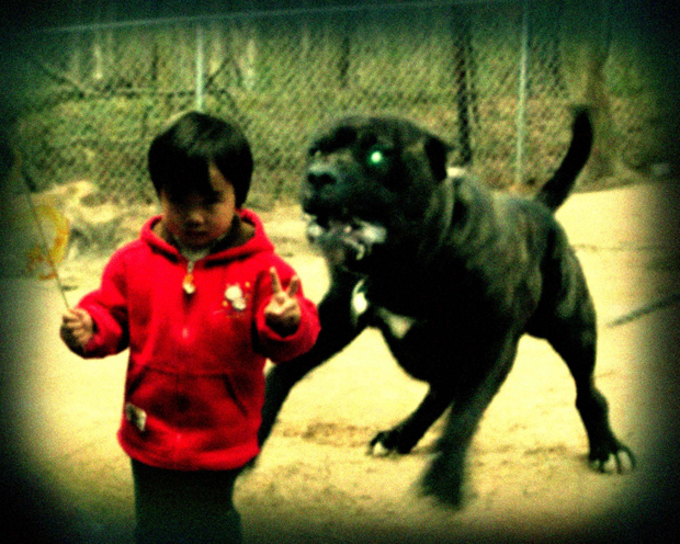 kid being chased by dog