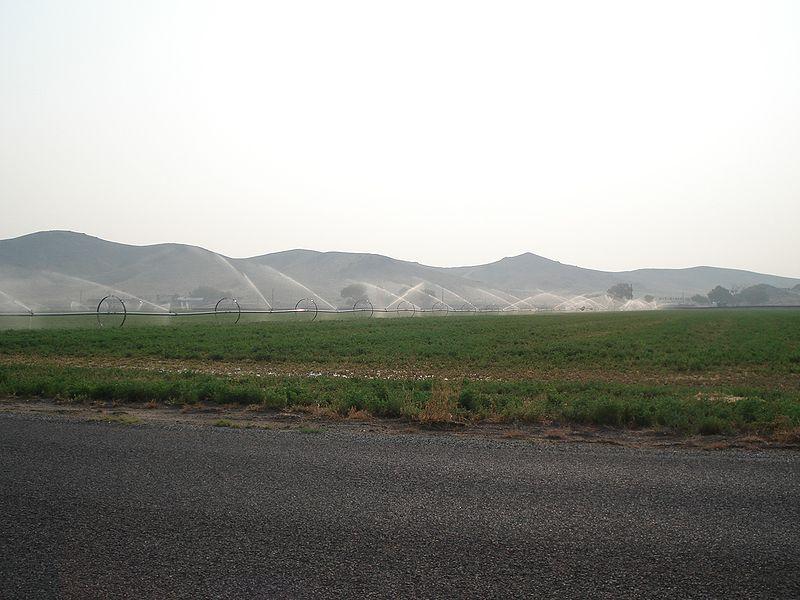 watering alfalfa