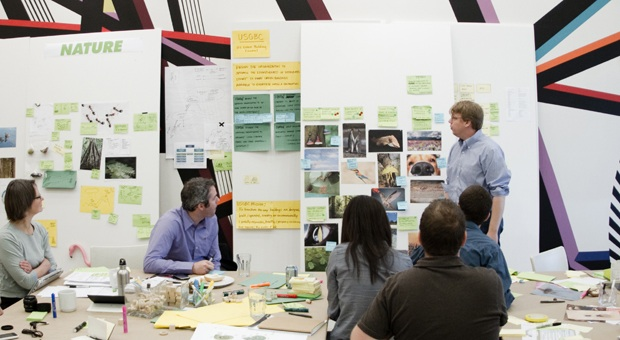 Biomimicry challenge ideo taps octopi and flamingos to for What is ideo