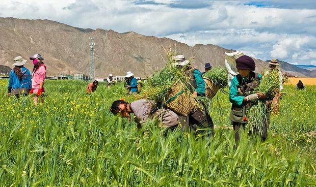 farmers in Tibet