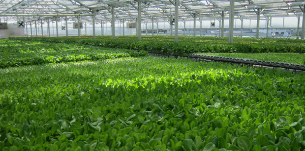 Gotham Greens Brooklyn S New High Tech Rooftop Farm