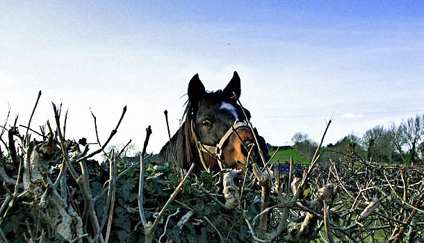Fbi spying on farmville for Farmville horse