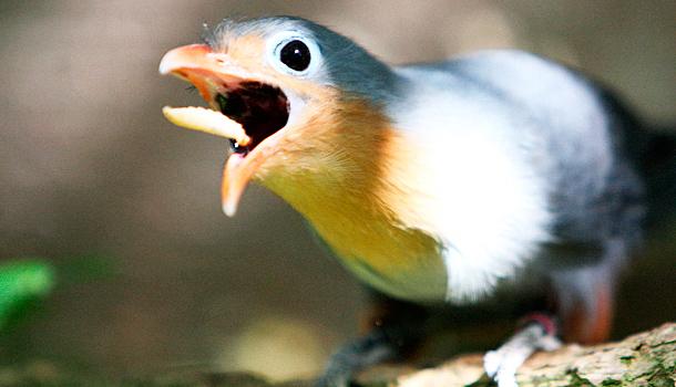5 Early Birds Share Everyday Productivity Strategies