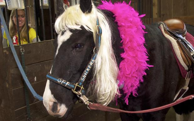Gaga FarmVille horse
