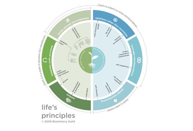 Life's Principles