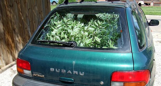 plant car