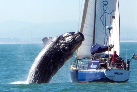 Whale and Yacht